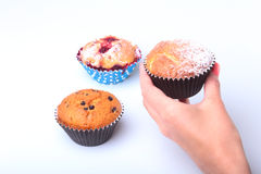 Homemade Blueberry ore chocolate muffins with powdered sugar and fresh berries in woman hand. Stock Image
