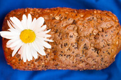 Homemade bread with cereals and chamomille on a blue background. For sample texte on it Stock Image
