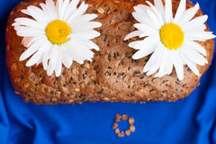 Homemade bread with cereals and chamomille face on a blue background Stock Photography