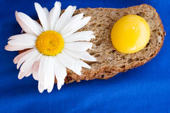 Homemade bread with cereals, chamomille and fresh egg on a blue background. For sample texte on it Stock Photography