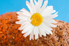 Homemade bread with cereals and chamomille and fresh egg on a blue background Royalty Free Stock Photography