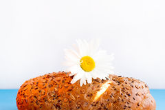 Homemade bread with cereals and chamomille on a white background. For sample texte on it Stock Images