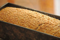 Homemade Bread mold Stock Image