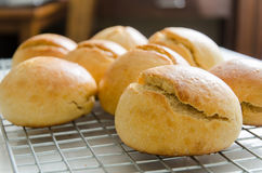 Homemade buns on cooking rack Royalty Free Stock Photo