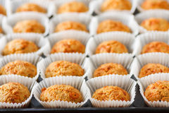 Homemade cheese muffins Royalty Free Stock Image