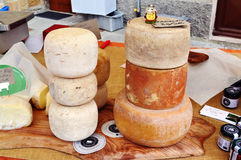 Homemade cheese pecorino Stock Images