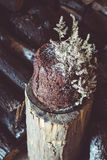 Homemade Chocolate Cake with Coconut Flakes and Dried Flower Decoration on a Log Stock Image