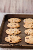 Homemade Chocolate Chip Cookies on a Baking Sheet Stock Photos