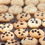 Homemade Chocolate Chip Cookies Ready to Eat.  Stock Images