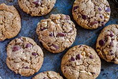 Homemade Chocolate Chip Cookies with Walnuts Stock Image