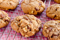 Homemade Chocolate Chip Cookies with Walnuts Royalty Free Stock Photo