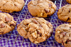 Homemade Chocolate Chip Cookies with Walnuts Stock Images