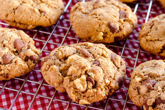 Homemade Chocolate Chip Cookies with Walnuts Royalty Free Stock Image