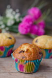 Homemade chocolate chip muffins. Royalty Free Stock Image