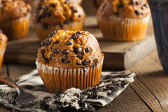 Homemade Chocolate Chip Muffins Stock Photos