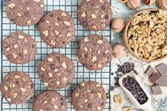 Homemade chocolate cookies with walnuts and chocolate chips on cooling rack, horizontal, top view Stock Photography