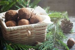 Homemade chocolate truffles with cocoa and coconut in a box. Christmas concept.  royalty free stock photography