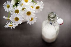 Homemade coconut milk in a glass next to ox-eye daisies Stock Image