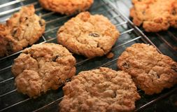 Homemade Cookies. Fresh-baked oatmeal cookies warm from the oven stock photo