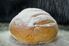 Homemade country bread with flour rain. Homemade country bread over dark background with flour rain Stock Photography