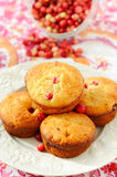 Homemade cranberry muffins Stock Image