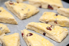 Homemade cranberry scones Stock Photos