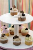 Homemade cupcakes Stock Images