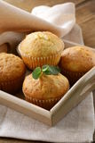 Homemade cupcakes muffins Royalty Free Stock Images