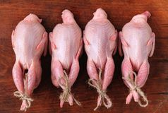 Homemade eco-friendly raw quails ready for cooking. Stock Photos