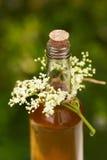 Homemade elderflower syrup in a bottle with elderflowers Royalty Free Stock Photo