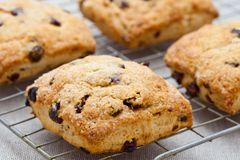 Homemade english scones Royalty Free Stock Images