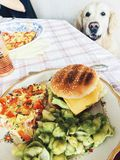 Homemade food. Burgers, pasta with avocado sauce, frittata. Golden retriever in background. Family lunch concept Stock Photography