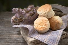 Homemade fresh classic scone on wood background royalty free stock photography