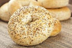 Homemade Fresh Whole Grain Bagel Stock Photography
