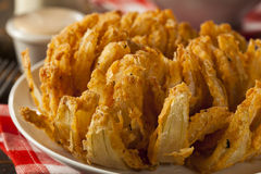 Homemade Fried Bloomin Onion Stock Photography