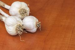 Homemade garlic grown in the garden. Traditional medicine against colds and flu. Strongly aromatic vegetables for cooking. Royalty Free Stock Images