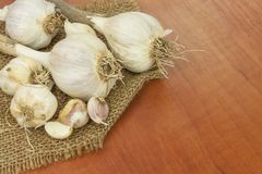 Homemade garlic grown in the garden. Traditional medicine against colds and flu. Strongly aromatic vegetables for cooking. Stock Images