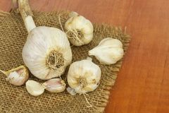 Homemade garlic grown in the garden. Traditional medicine against colds and flu. Strongly aromatic vegetables for cooking. Stock Photography