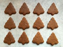 Homemade gingerbread Christmas cookies cooling on kitchen countertop Royalty Free Stock Photography