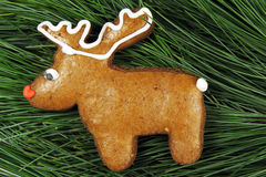 Homemade gingerbread on fir tree Royalty Free Stock Image