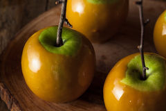 Homemade Green Caramel Apples. On a Stick for Halloween Stock Image