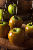 Homemade Green Caramel Apples. On a Stick for Halloween Royalty Free Stock Photos