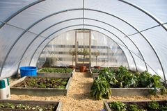 Homemade Greenhouse. A homemade greenhouse constructed with aluminum tubing and sheets of plastic is used for backyard growing Stock Image