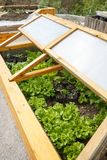 Homemade greenhouse raised garden bed. With young lettuce and other vegetables being grown. Modern gardening, winter production, organic gardening, homegrown Royalty Free Stock Photos
