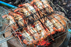 Homemade grilled prawns. Stock Images