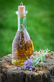 Homemade and healthy tincture made of lavender Stock Image
