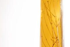 Homemade herbal liqueur Royalty Free Stock Image