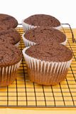 Homemade Chocolate Cupcakes on a Kitchen Cooling Rack Royalty Free Stock Images