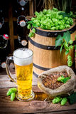 Homemade light beer Royalty Free Stock Images