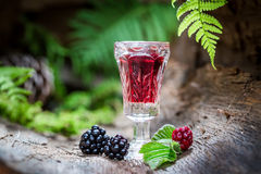 Homemade liqueur made of alcohol and blackberries Stock Images